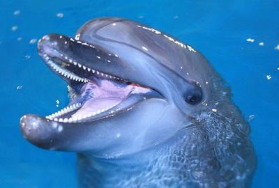 Дайвинг с дельфинами в Анапе