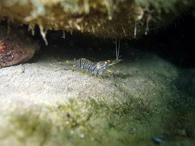 Подводные обитатели Черного моря